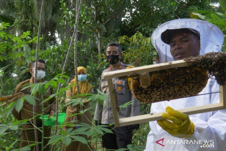 Polres Merangin  bina warga mantan pelaku PETI pelihara lebah
