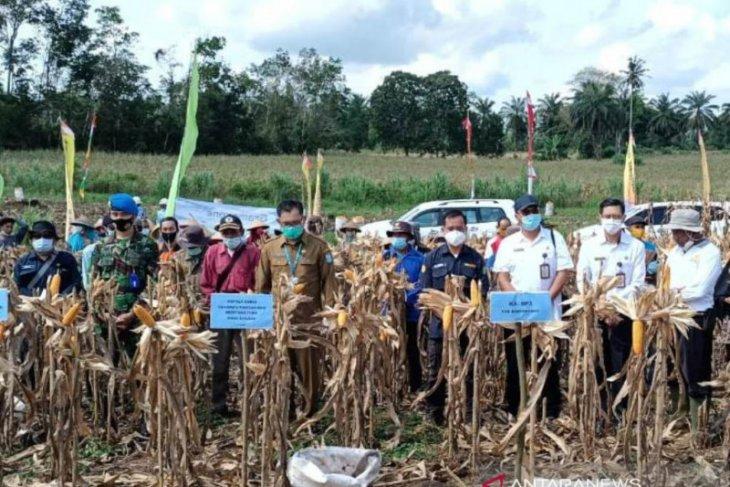 Bengkayang jadi sentra pengembangan jagung Kalbar