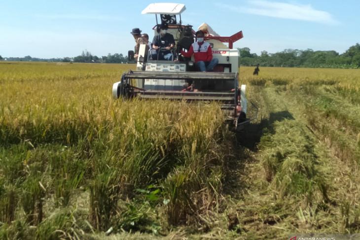 DPRD Jabar desak Bulog percepat penyerapan gabah petani atasi anjloknya harga