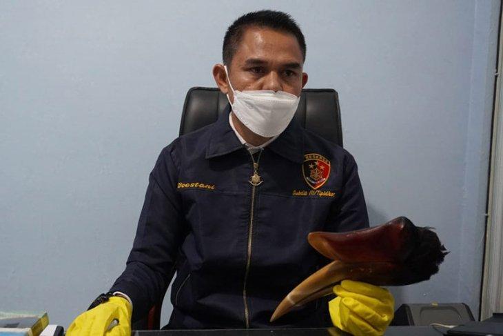 Polisi ringkus seorang pemuda pemburu burung rangkong di Bener Meriah