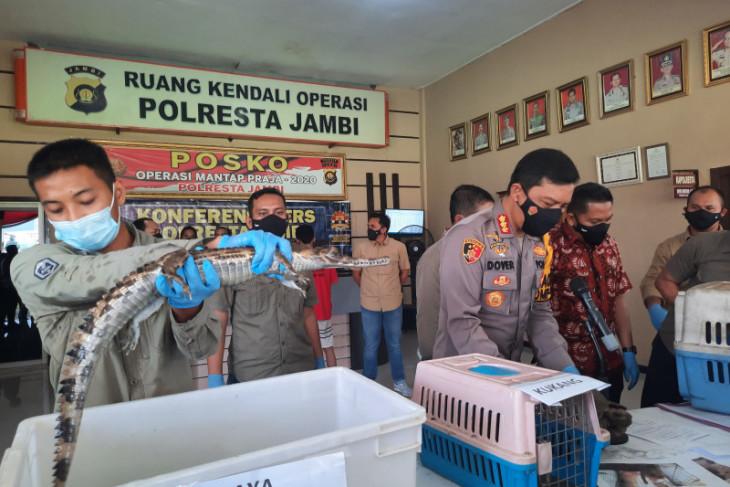 Polresta Jambi amankan pelaku perdagangan satwa dilindungi