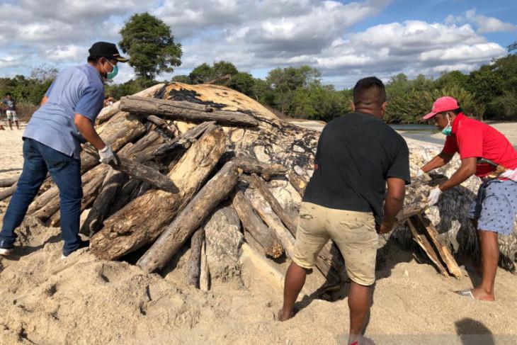 Nelayan lakukan ritual adat untuk bakar bangkai paus