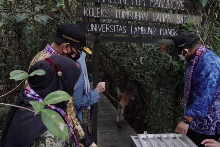 Acting governor plants liberica coffee, releases bekantan on Curiak Island
