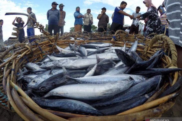 Nelayan kecil diberdayakan tangkap ikan tuna
