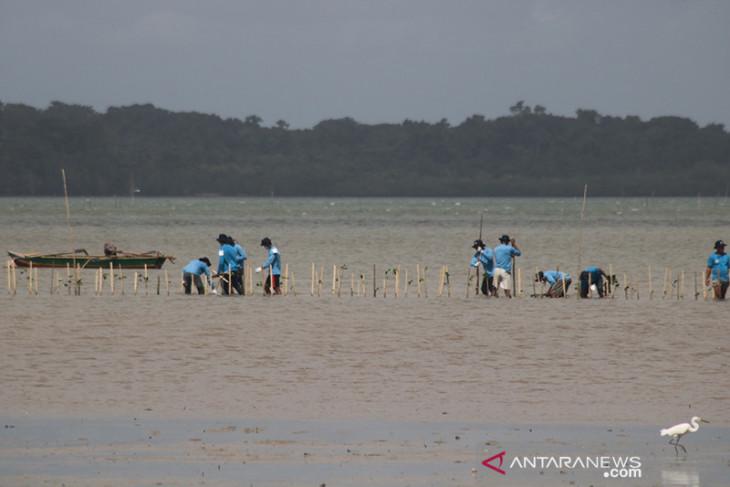 Kemendes PDTT rehabilitasi 60 ha hutan mangrove di Kepulauan Tanimbar lestarikan lingkungan