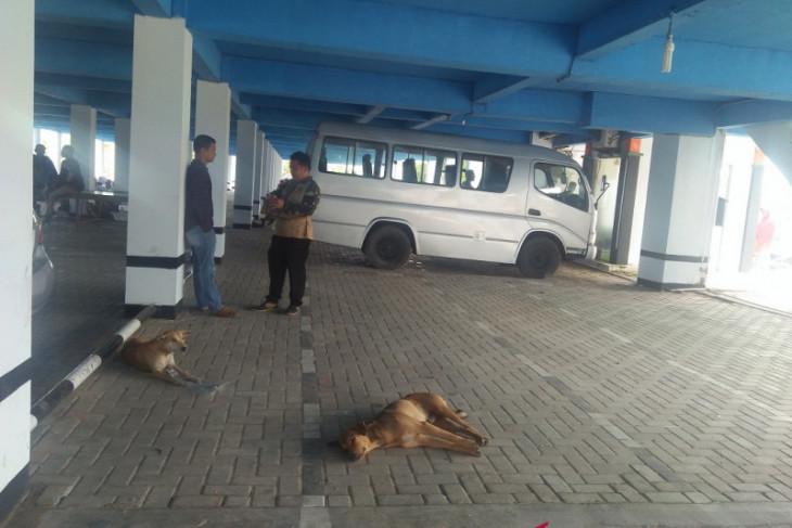 Korban gigitan hewan penular rabies di Mukomuko, Bengkulu bertambah