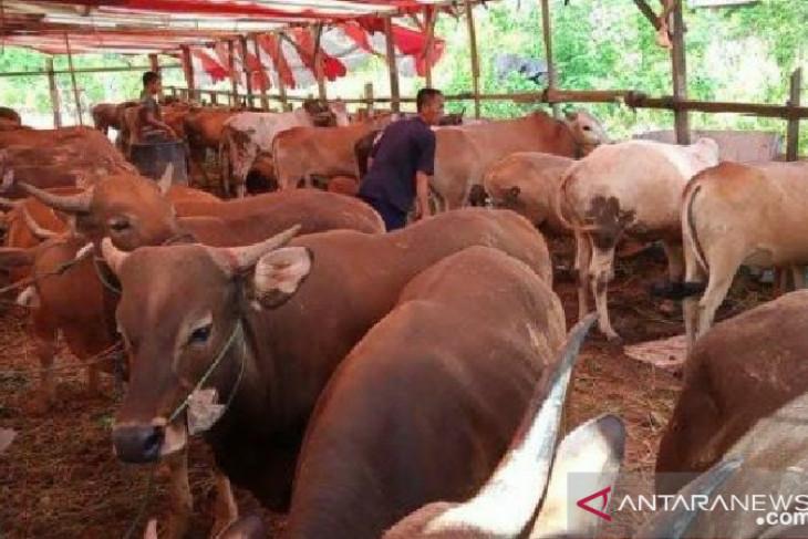 Pemkot Bengkulu pastikan stok hewan kurban aman