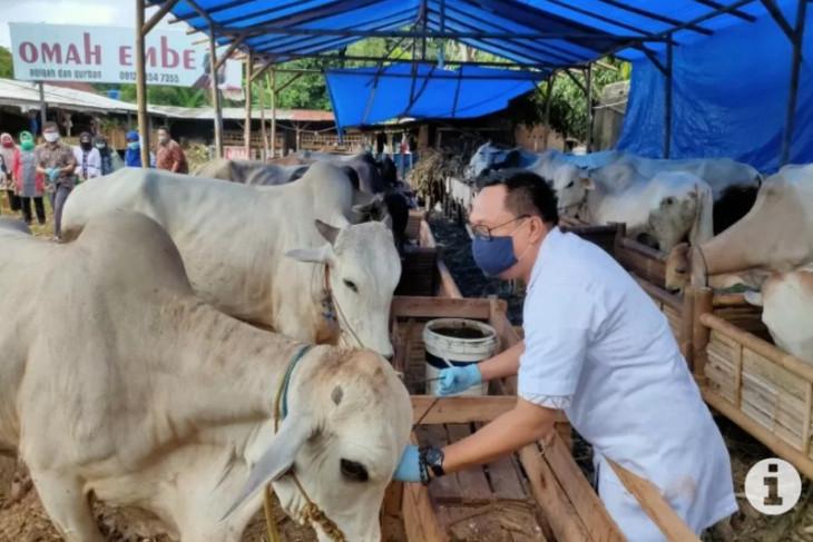 Ini persediaan hewan  kurban di Aceh Besar