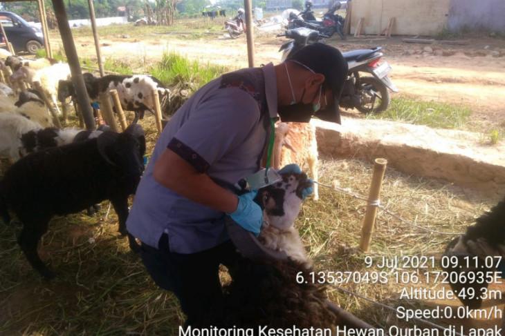 Distan Provinsi Banten waspadai penyakit menular pada hewan kurban