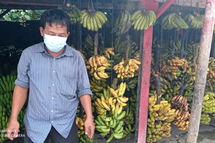 Omzet   pedagang pisang di Lebak meningkat