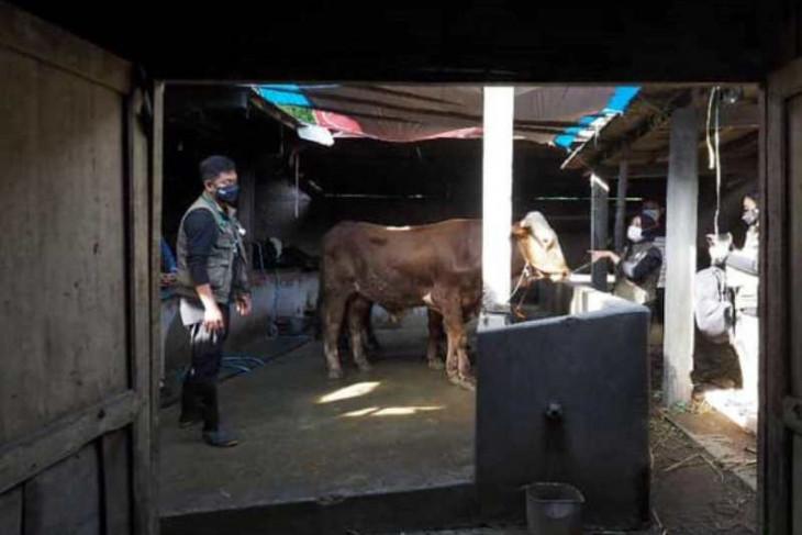 Pemkot Madiun periksa kesehatan hewan kurban jelang Idul Adha