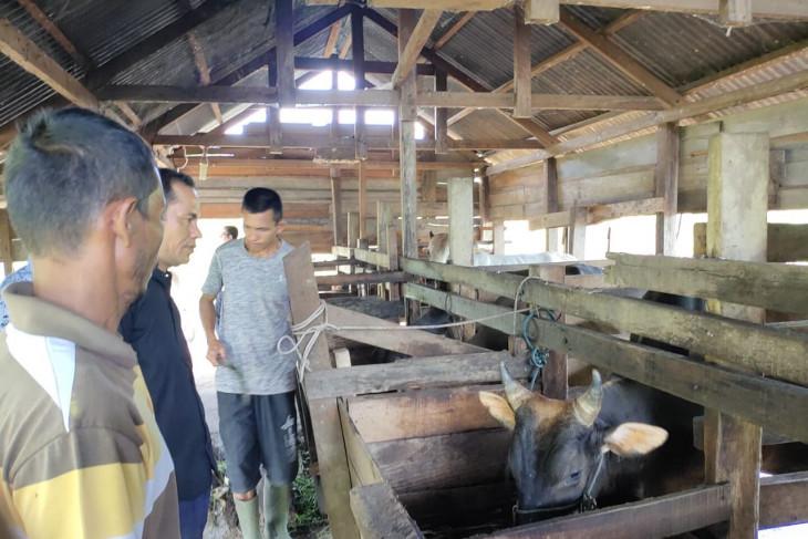 Cara Dinas Pertanian Aceh Jaya meningkatkan ekonomi petani ternak