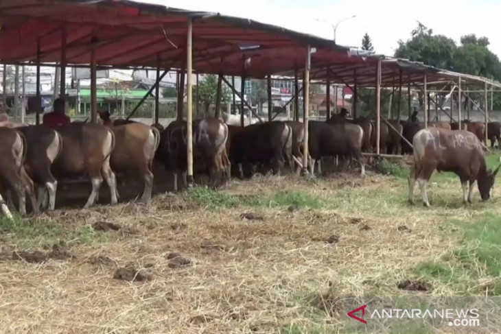 Penjual hewan kurban di Bekasi keluhkan omzet turun drastis