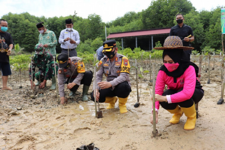 Kapolres Langkat lakukan penanaman mangrove jenis apikulata