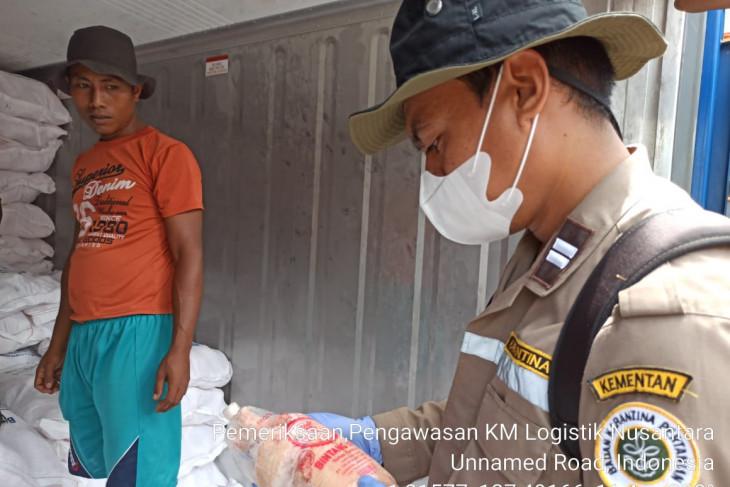 Balai Karantina Pertanian Ternate tolak 12 ton ayam beku dari  Surabaya begini kronologinya