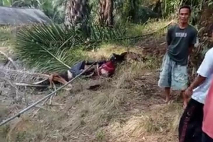 Dua pemuda tewas tersengat listrik saat petik sawit