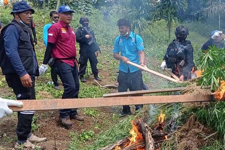 BNN musnahkan dua hektare ladang ganja di Aceh Utara