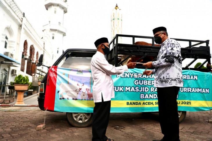 Gubernur Aceh serahkan kurban seberat 700 kilogram