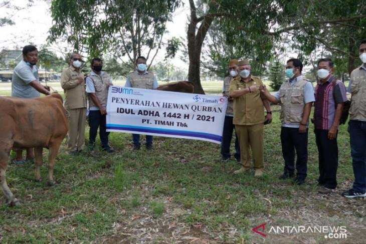 PT Timah salurkan 25 sapi kurban di Bangka Barat