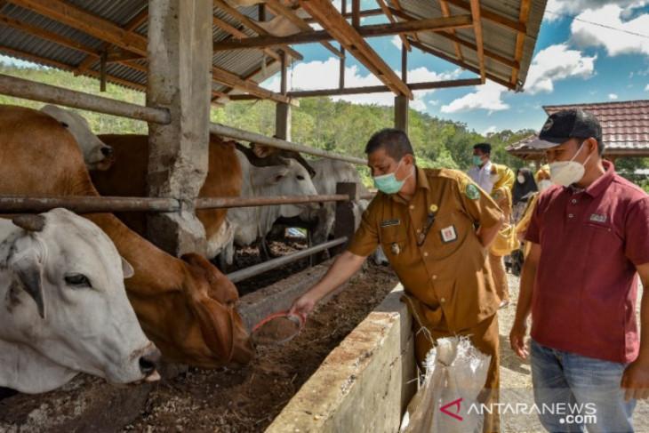 Pemkot Padangsidimpuan periksa sejumlah hewan kurban