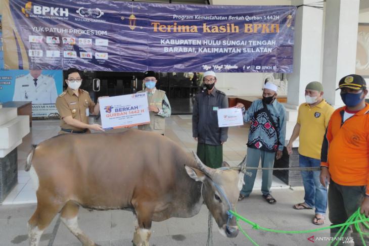 NU CARE - LAZISNU serahkan sebanyak 8 ekor sapi kurban untuk warga Kabupaten HST