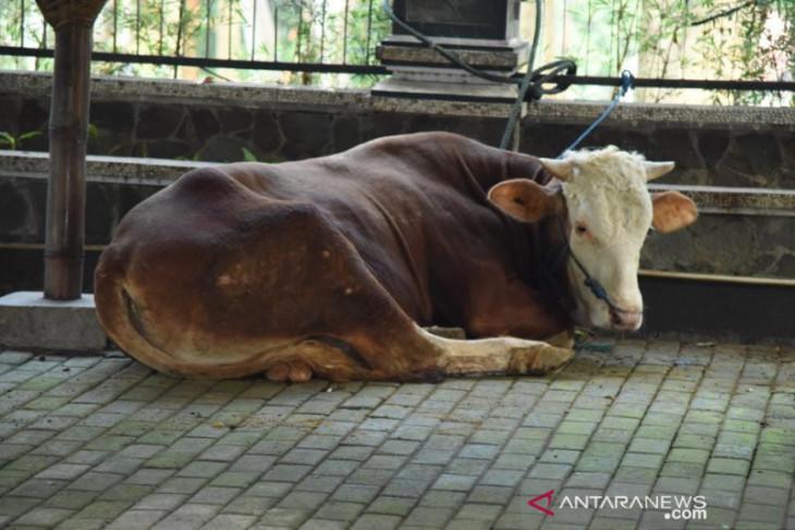 Pemkab Purwakarta bagikan ratusan hewan kurban ke pedesaan