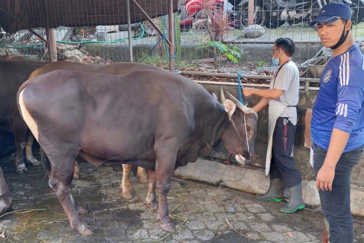 LDII Bali: Permintaan sapi kurban naik 5-10 persen