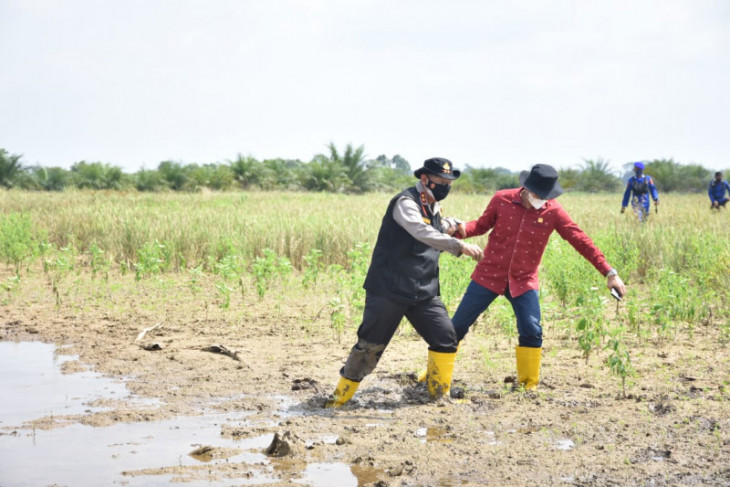 Antisipasi karhutla, Ketua DPRD dan Kapolda Jambi masuk lumpur tinjau Taman Nasional Berbak