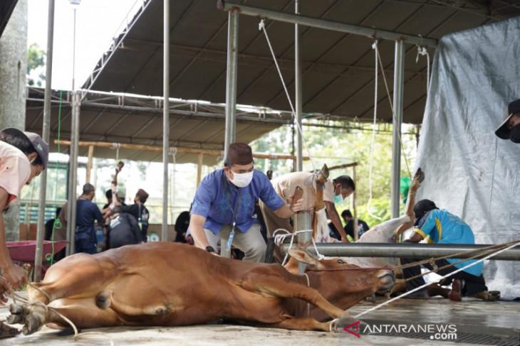 Masjid Al Furqon Pangkalpinang potong 19 hewan kurban secara tertutup