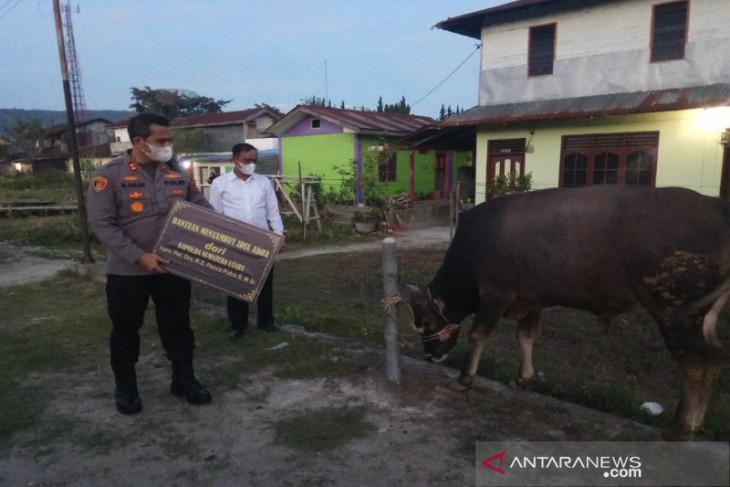 Rayakan Idul Adha, Kapolda Sumut berikan sapi kurban di Taput