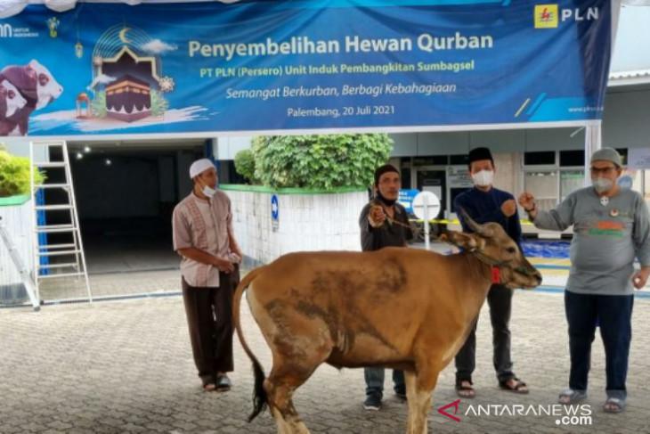 Sambut Idul Adha 1442 H, PLN sumbangkan 2.977 hewan kurban