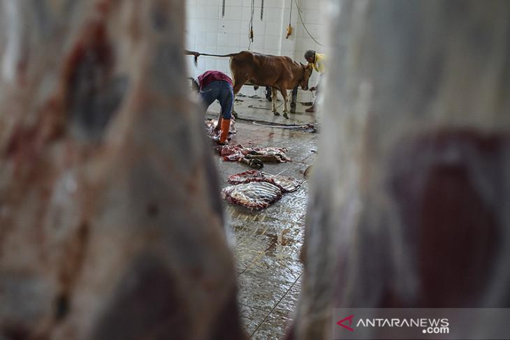 Layanan penyembelihan hewan kurban di RPH