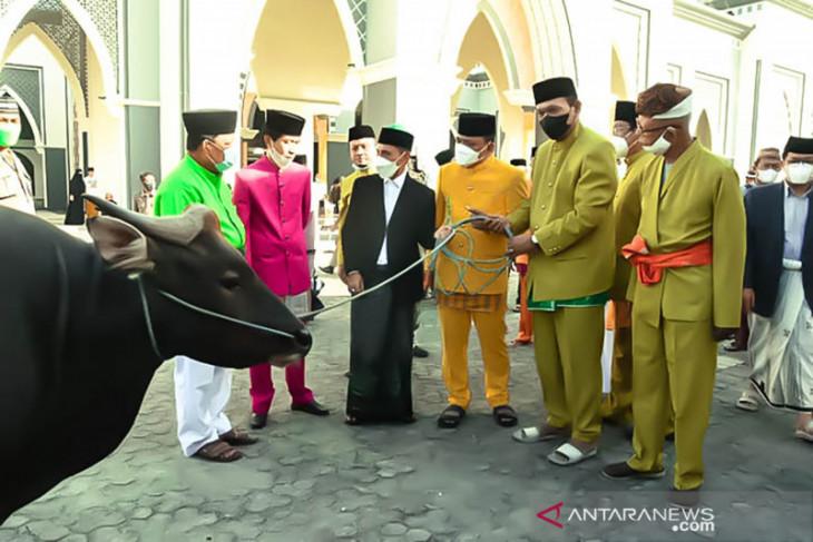Bupati Nelson: 2.999 ekor hewan di Gorontalo dikurbankan pada Idul Adha