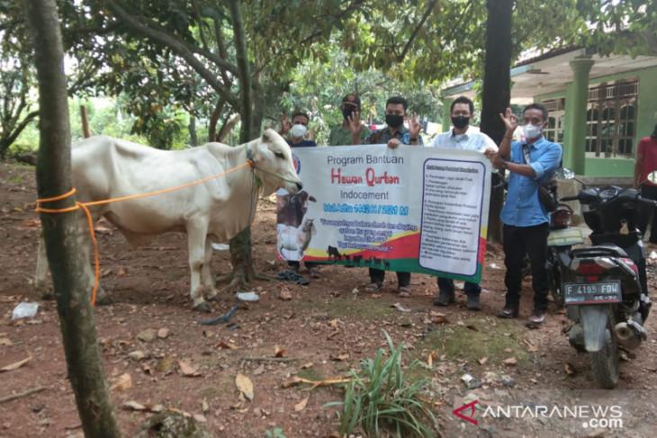 Indocement bagikan 32 hewan kurban untuk masyarakat di Bogor