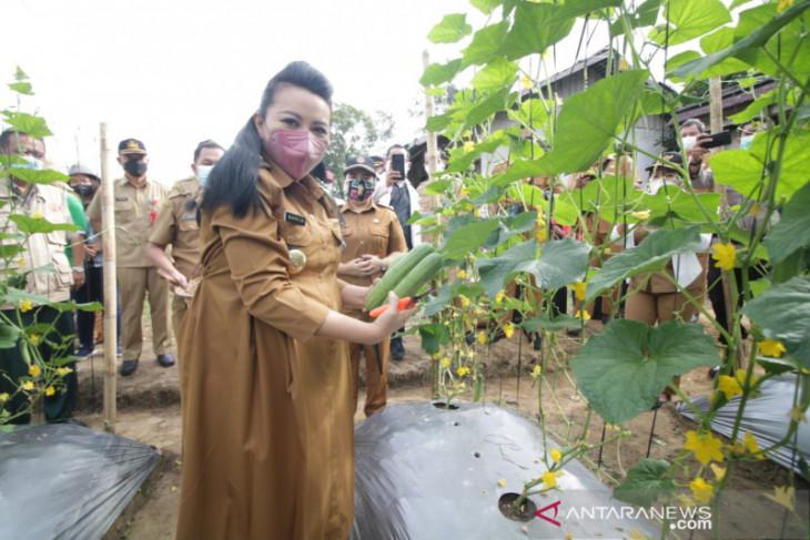 Bupati Karolin ajak masyarakat bertanam sayur di perkarangan rumah