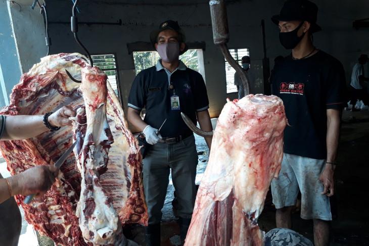 Sejumlah sapi mengidap cacing hati saat disembelih di RPH Kediri