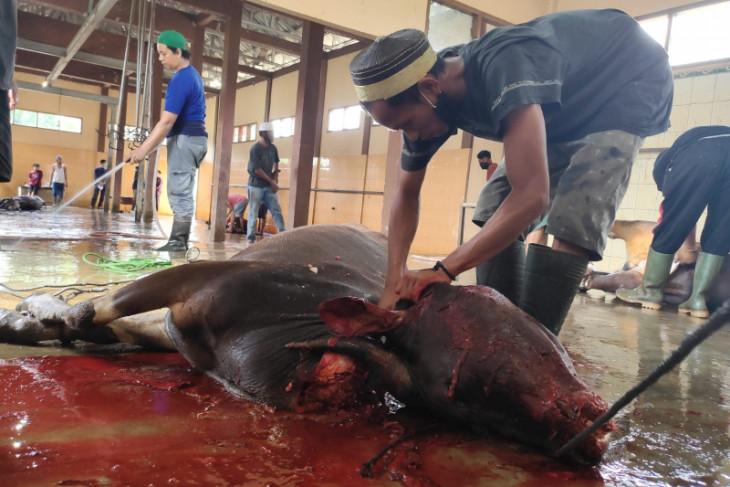 Pemotongan hewan kurban di RPH Paser penuhi protokol kesehatan