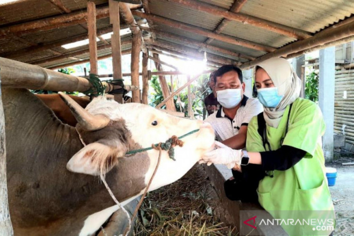Pemotongan hewan kurban di Rejang Lebong meningkat