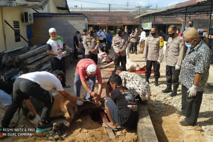 Kapolres Sibolga pimpin penyembelihan hewan qurban, sekaligus imbau prokes