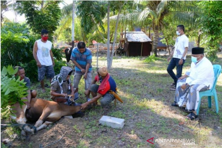 Pemprov Gorontalo salurkan hewan kurban dari ASN