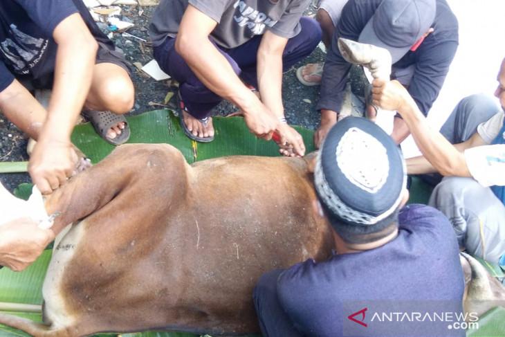 BEM Stikes Darul Azhar berkurban satu ekor sapi