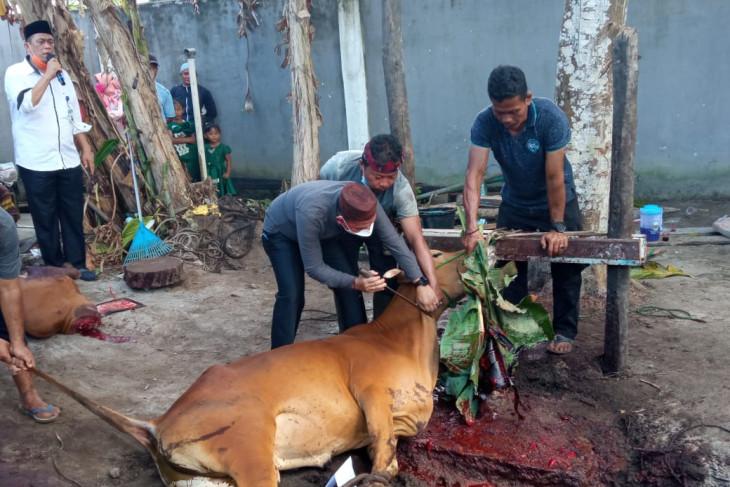 Pemkab Bangka potong 32 ekor sapi kurban