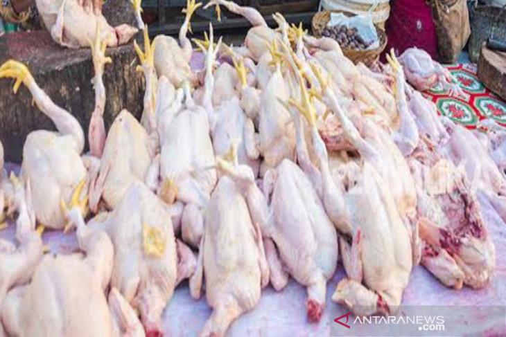 Harga ayam ras di Medan naik didorong  permintaan tinggi