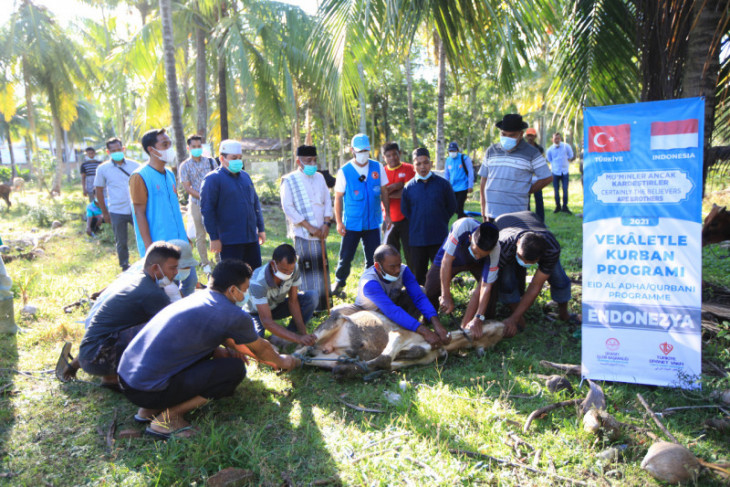 Masyarakat Turki kurban 50 ekor sapi di Aceh Besar