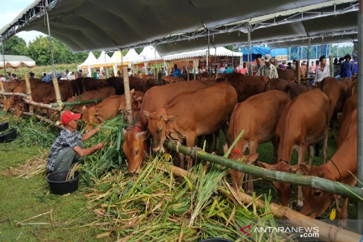 Dompet Umat salurkan 98 ekor hewan kurban di Kalimantan Barat