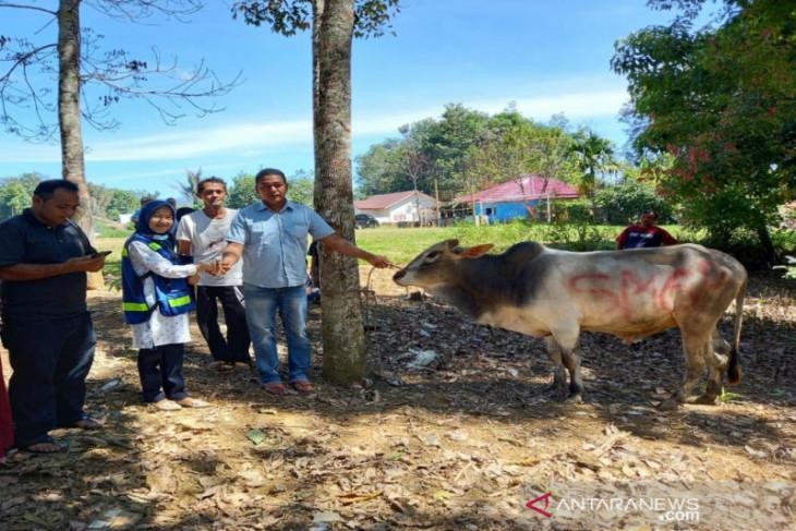 SMGP salurkan 6 ekor hewan qurban di Madina