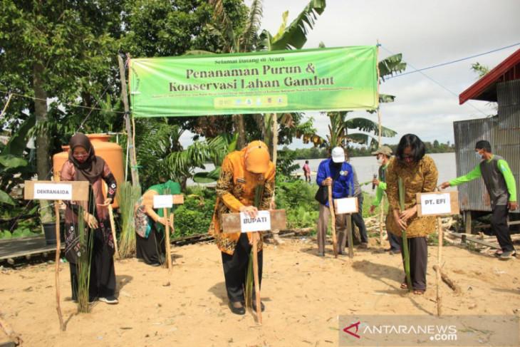 Batola-EFI collaborate to develop purun danau