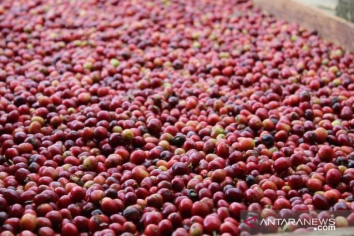 Kopi Tapanuli Selatan ikuti lelang kopi di Singapura