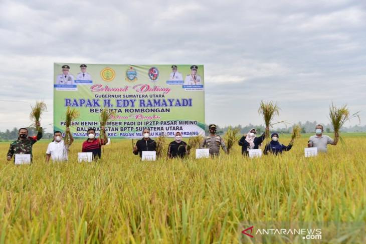Produksi padi Sumut pada Agustus 2021 diprediksi 370.590 ton