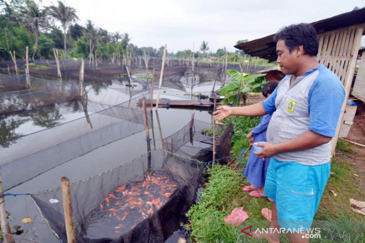 Produksi ikan konsumsi di Bogor alami penurunan selama pandemi